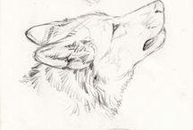 Creature Anatomy | Canines