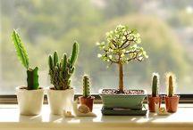 PlantsPlantsPlants!! / Because greens never turns ur house ugly :):)