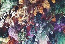 •flowerpower•