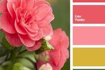 Colour Combos / Colour Combinations
