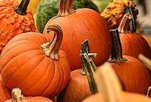 Pumpkin Pumpkin Everywhere / by Denna Magee