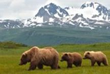 alaska / Have traveled to Alaska, would highly recommend it / by Denna Magee