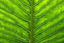 ...prostě zelená :-)