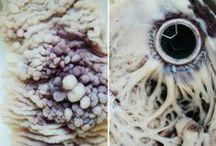 Patrones/Texturas
