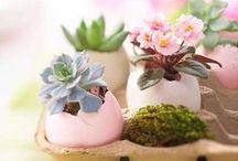 Easter  / by Katarina Verley