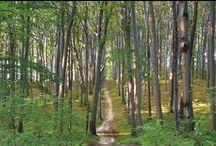 Las / Migawki z róznych lasów.