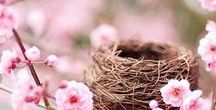 Moodboard - Springtime