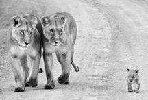Animals....So Sweet!!!