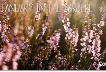 January in the Garden