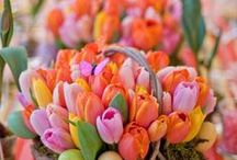 Spring to life / Sweet thoughts of beginnings-  soft pastels, bright green shoots, fuzzy baby chicks-my favorite time of year...