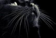 Yes, I am a Cat-a-holic...