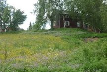 Svensk sommar  (egna bilder) / http://villaskogsbrynet.blogspot.se/