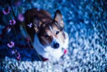 ~DOGS! <3~ / by Melanie Foreverdeen