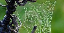 SPIDER WEBS / Intricate weavers