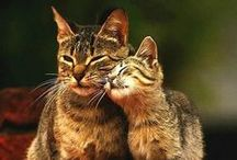cats I love / sweetie pies / by Rouw