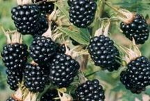 Brambles and Hedges / ~ Briars, berries and blooms with a few wee visitors ~