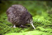 ♥ New Zealand