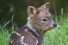 tiny baby animals / by Rouw