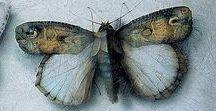Beautiful Butterflies & Moth's