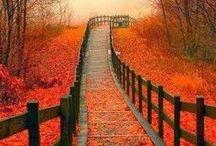 Fall is Beautiful # 2 / by sandra godbee