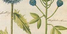 ~ Almanack ~ / ...Herbs...