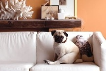 For the Love of a Pug