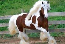 Horses / by Marlene S.