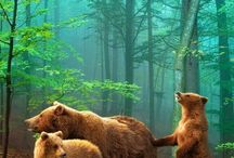 Animals - Bears / All types of Bears. / by Rae Ann Kressin