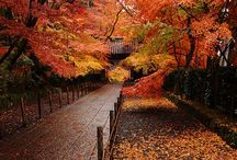 Fall / Autumn pictures / by Bre Adams
