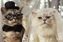 Wedding Cats!