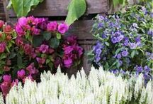 """Gardens / """"I sit in my garden, gazing upon a beauty that cannot gaze upon itself. And I find sufficient purpose for my day.""""   ~Robert Brault"""