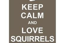Squirrels and Humour / Funny things and nutty humour