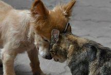 Animali / I love animals, and you?