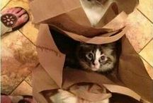 Cute Kitty Stuff