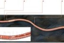 Science Fair Henrique and Raul / Science fair project: Gecko vs. Earthworm