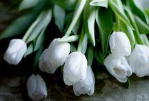 Flowers-kukat / Kimput, pensaat, asetelmat, istutukset