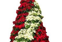 Christmas -Poinsettia Tree / Display It - Poinsettia Trees, potted poinsettias, artificial stems and bushes wholesale to retail stores, casinos, hotels, restaurants and corporate or commercial spaces. Email: sales@displayit-info.com  Website:  http://www.displayit-info.com