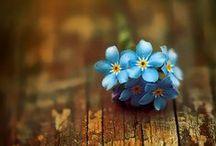 Blue, aqua, teal etc. / by Alyssa W