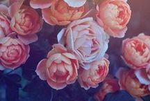 Flowers / by Alyssa W