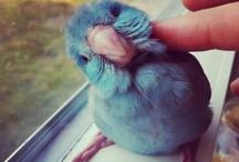 Lovelies Blue / by Marie Gateley Del Aguila