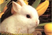 Osterbilder / Schöne Osterbilder für das Osterfest