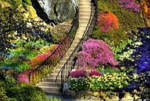 Stairway to....... / by Betty Gilbert