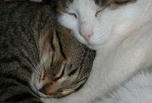 Felinamente / cats from Felino (Parma - Italy)