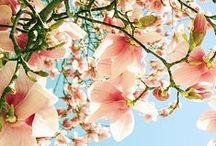 Blooms / Flower Power