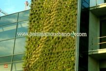 Jardin Vertical, Jerez de la Frontera, Brassica