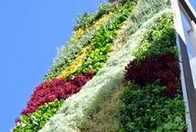 Jardin Vertical confederacion empresarios privados de Cochabamba (Bolivia) / Jardin de 80m2 con más de 3000 plantas de 35 especies distintas, realizado en colaboración con el arquitecto Leonardo Teran de Bolivia.