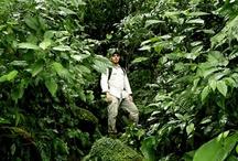 Expedicion botanica selvas del Chapare Boliviano