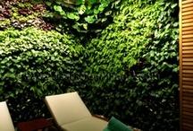 """Jardin Vertical en Mallorca / Este Jardin Vertical de 43m2 lo hemos realizado en en el spa del hotel """"Castell Son Claret"""". Es un Ecosistema Vertical con 2000 plantas de 15 especies distintas, principalmente de sotobosques tropicales. Esta creado con un diseño orgánico que encaja perfectamente en la localización en la que se ubica, la piscina climatizada del Spa. La complejidad de este Muro verde radica en la altísima humedad ambiental y en la falta de iluminación."""