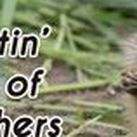Weed & Pest Control / Bugs, Critters, and more!