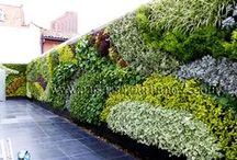 Jardin Vertical - Universidad CESA - Bogotá / A finales de 2012 comenzamos el primero de dos proyectos con Groncol SAS en el CESA, una de las universidades de Negocios más importante de Colombia. Este proyecto consistía en adecuar uno de los patios de las particulares casas inglesas del centro de Bogotá. El ecosistema Vertical tiene 79 M2 y se espera que tenga un alto impacto visual en la vida de los estudiantes, contribuyendo con el buen ambiente, la salud y la productividad de los mismos.